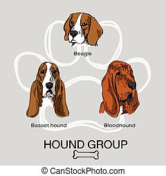 dog hound group pack1 - 3 dog hound group, beagle, basset...