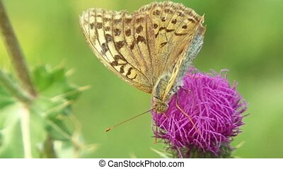 Butterfly - Insects pollinate flora.