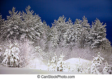 Winter wood in the night - Winter wood photographed in the...