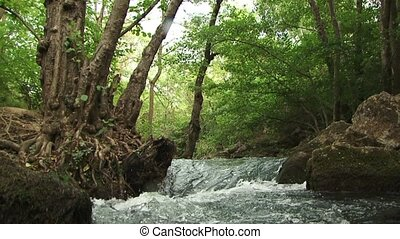 River - Forest river with a strong flow