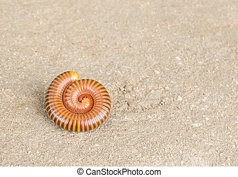 Millipede on the cement floor - Close up millipede on the...