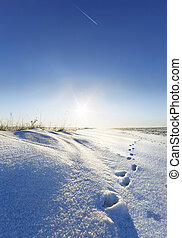 Snowdrift and should animal against the sun