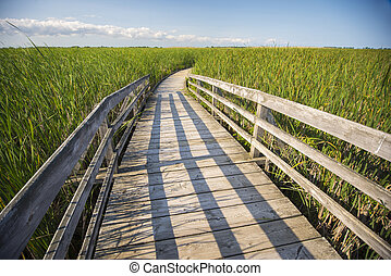 Board walk in marsh area - Wooden board walk on Pelee point...
