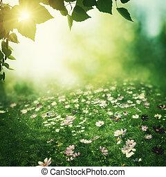 Été, naturel, pré, beauté, résumé, Arrière-plans, fleurs