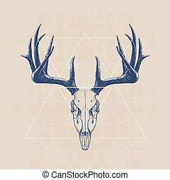 deer skull, hand drawn illustration