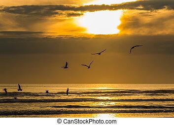 Seagulls Sunset