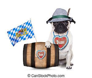 bavarian german pug dog - bavarian german pug dog behind...