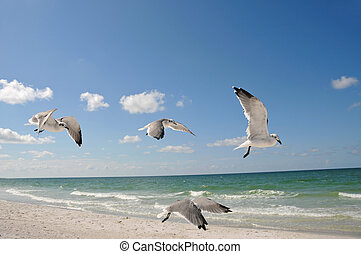 Seagulls In Flight