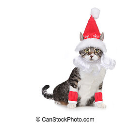 Cat Wearing a Santa Claus Hat and Beard on White - Humorous...