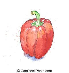 Red bell pepper - Vector watercolor red bell pepper isolated...
