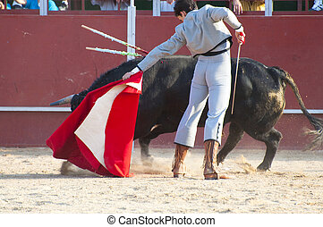 Fighting bull picture from Spain. Black bull