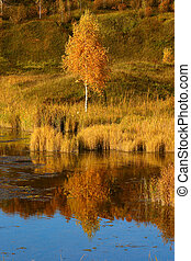 Autumn birch on river bank reflected in a water smooth...