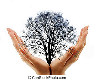 two hands holding bare tree on white background