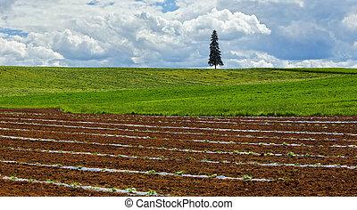 Farmland Planting Crops Fresh