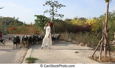 girl in vietnamese walks along road and goats pass by -...