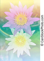 lotus flower background beautiful flowers made with color...