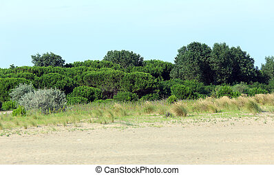 shrubs and plants typical of the Mediterranean with the sand...