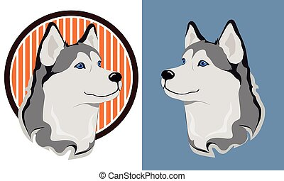 Husky dog - beautiful medal husky isolation on a white and...