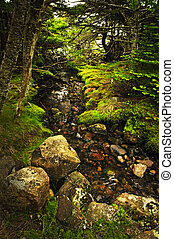 Forest creek - Small stream among fresh green summer forest...