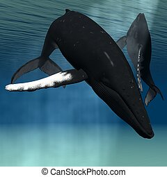 Humpback Whale - 3D Render of an Humpback Whale
