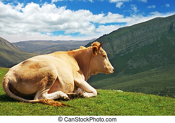 Cow on top of the hill in summer - Cow on top of the hill in...