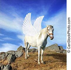 Pegasus - Mythical pegasus stands on mountain peak ready to...