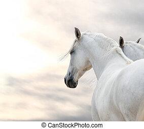 dos, blanco, caballos, en, tiempo, día,