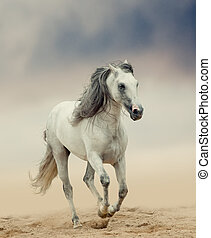 white andalusian stallion in gradient filter tones
