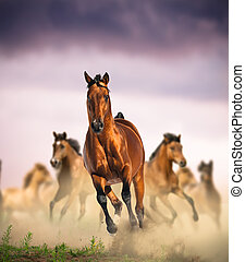 wild horses group running in dust against the purple sunset...