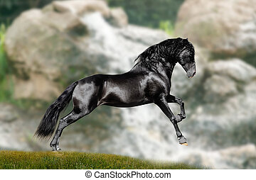 black stallion runs between mountains