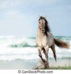 wild stallion running near water