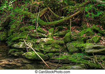 green moss on rocks near a stream in forest