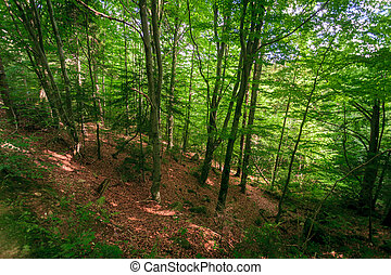 beautiful forest green wooden Ukraine