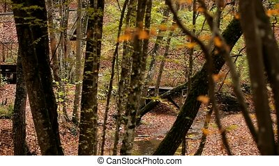 Autumn Forest - Beautiful autumn forest in the center of...
