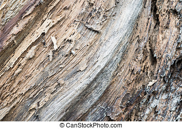 Rotten wood trunk - Detail of a rotten trunk wood