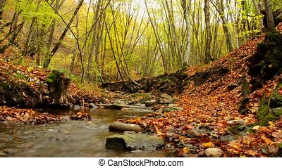 Small River - Beautiful autumn forest with fallen leaves and...
