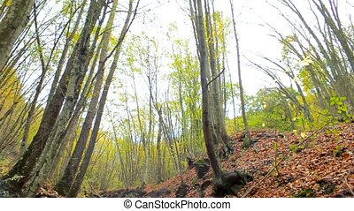 Autumn Forest And River - Beautiful autumn forest with...