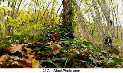 Forest Plants - Beautiful autumn forest with fallen leaves.