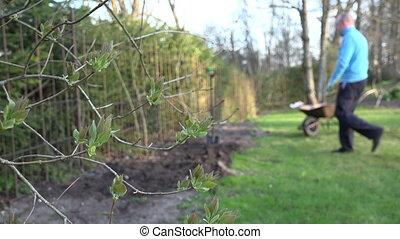 lilac twig leaf gardener - Unfolding lilac twig leaves move...