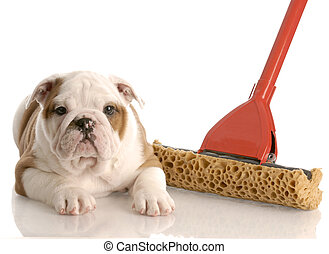 english bulldog puppy laying beside a sponge mop