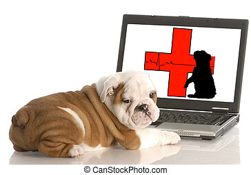 looking for animal health information online