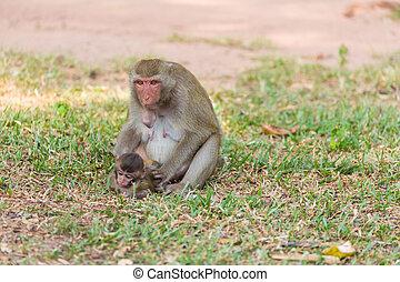 mère, singe, Conclusion, pou, et, cootie, pour,...
