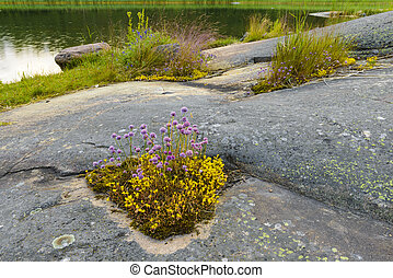 Summernight in archipelago - Cliffs and plants in...