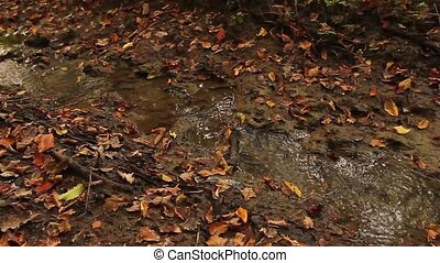 Small muddy creek, stream. - Autumn colorful leaves are in...