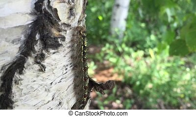 caterpillar crawling on the tree