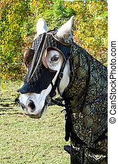 White horse medieval jousting gear - White horse wearing...