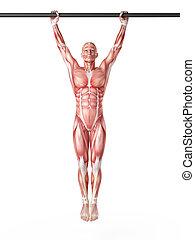 workout - hanging leg raises - exercise illustration -...