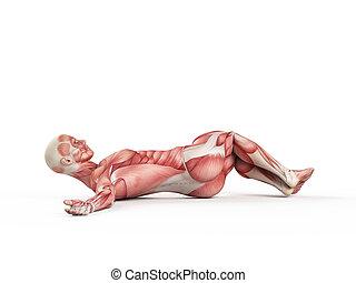workout - negative situp - exercise illustration - negative...