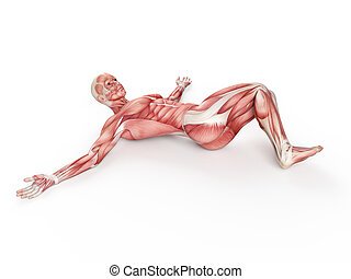 workout - negative situp - exercise illustration - negative...
