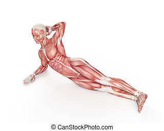 workout - side bridge - exercise illustration - side bridge